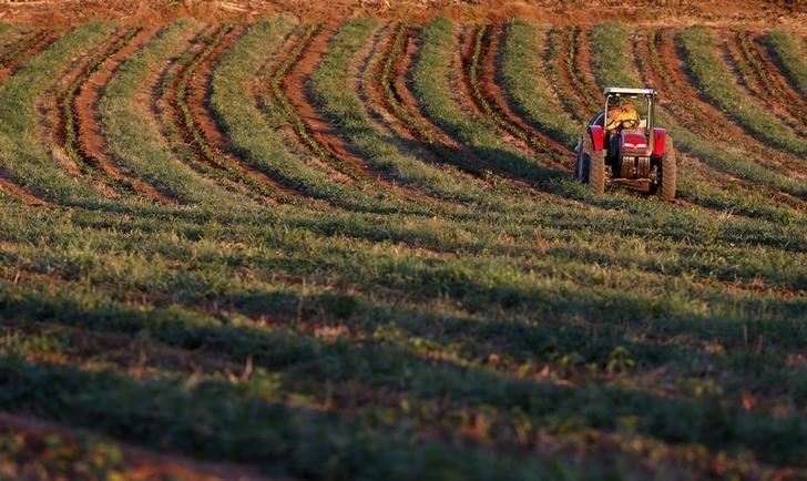 © Reuters.  Italian farmers oppose EU-Mercosur trade deal: Italy's agriculture minister